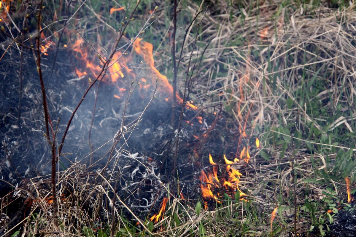 bruciare l'erba in primavera