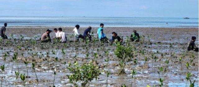 Fajar, l'uomo che ha sfidato il dissesto idrogeologico in Borneo