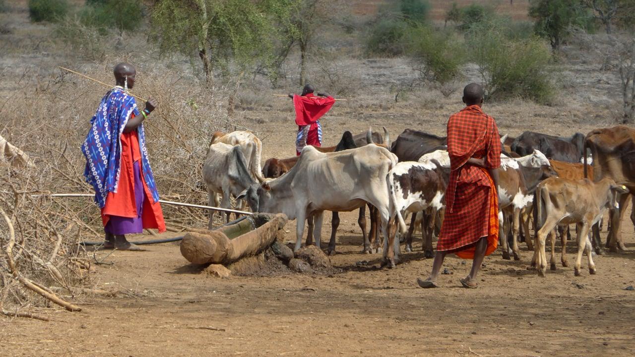 maasai-pastori